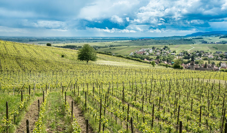 service comptable pour les viticulteurs